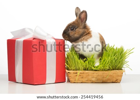 Little brown bunny sitting in grass near present box with white ribbon. Concept for holidays - stock photo