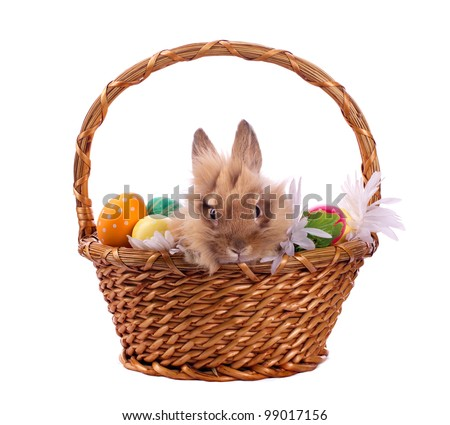 Little bunny and Ester eggs in twigged basket isolated on white - stock photo
