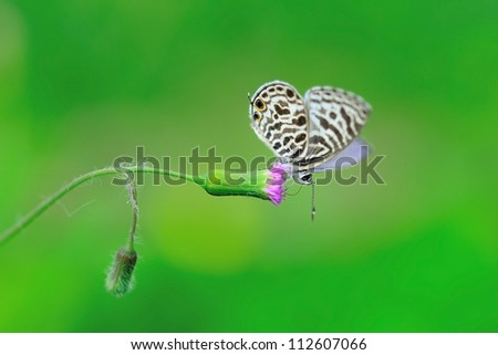 Little butterfly - stock photo