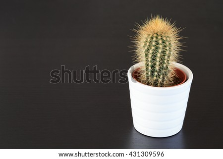 little cactus plant on dark