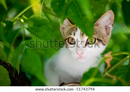 Little cat in the green summer tree