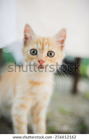little cat is staring in front of the camera - stock photo