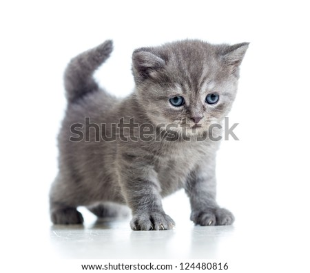 little cat kitten isolated on white - stock photo