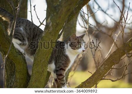 Little cat on tree - stock photo