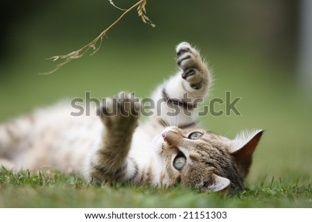 Little cat playing in the grass - stock photo