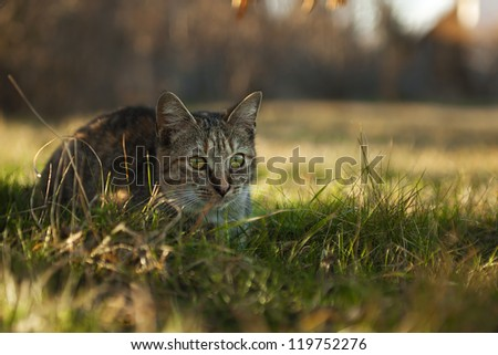 Little cat relax under a bush. Check my portfolio for more amazing nature photos. - stock photo