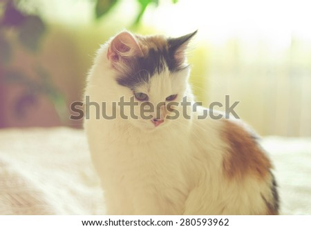 Little cat sit on the home bad - stock photo
