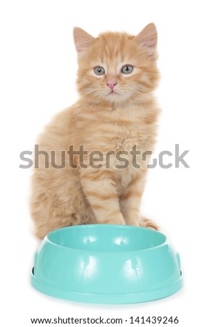 Little cat sitting behind a bowl isolated on white - stock photo