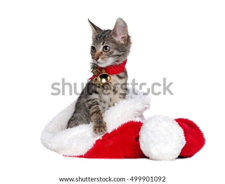 Little cat sitting in a Christmas hat looking to the copy space area
