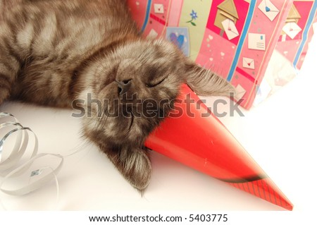 Little cat sleeping after party - stock photo