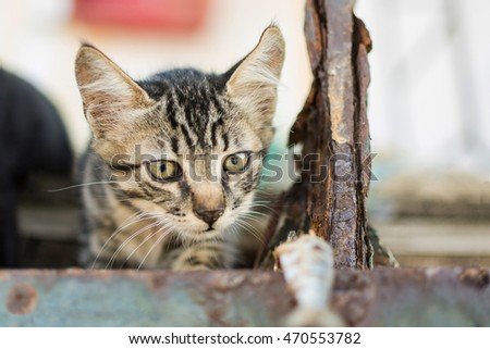 Little Cat Watching Fish on Abandoned Old Rusty Ship