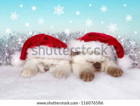 Little cats wearing Santa's hat sleeping - stock photo