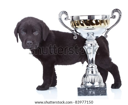 little champion - side view of a cute black labrador puppy standing behind its big cup - stock photo