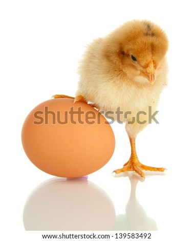 Little chicken with egg  isolated on white - stock photo