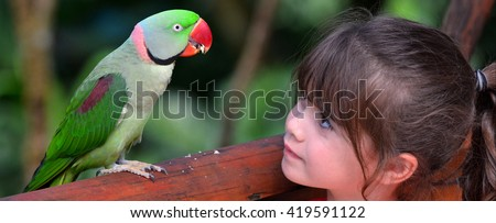 Little child (girl age 5-6) looks at Alexandrine Parrot native to India and South East Asia. - stock photo