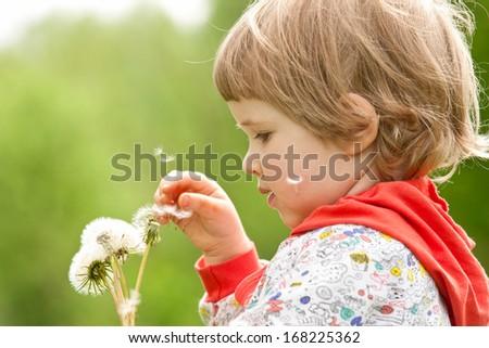 Little child holding white dandelions - stock photo