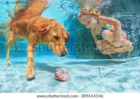Little child play with fun and train golden labrador retriever puppy in swimming pool - jump and dive underwater to retrieve shell. Active games with family pets and popular dog breeds like companion. - stock photo