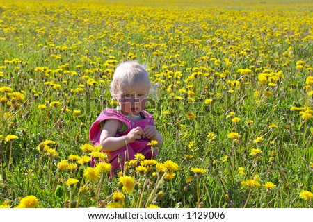 little child sitting on a big dandelion meadow