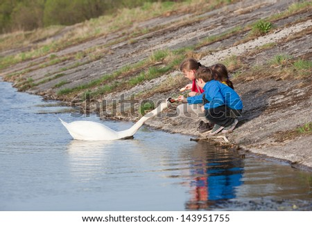 Little children feeding the swan a bread, at the riverbank in the evening