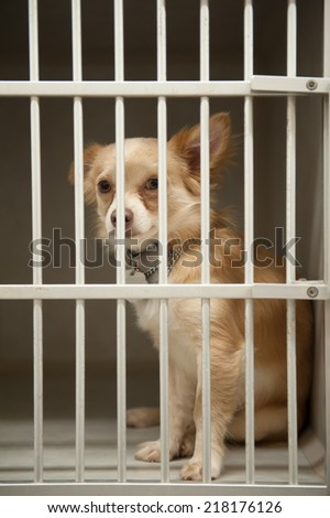 Little Chion dog sits behind the bars of a shelter cage - stock photo