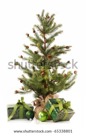 Little christmas tree with gifts on white background - stock photo