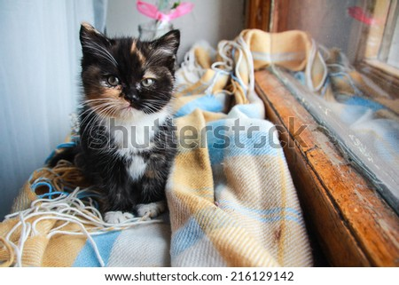 Little Cozy Kitten Sitting In The Plaid In Student 39 S Room Stock