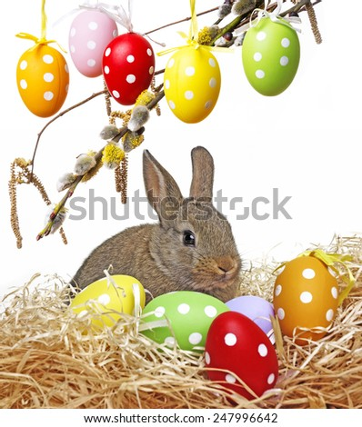 little cute baby rabbit and painted easter eggs - white background - stock photo