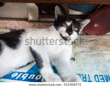 Little cute black and white kitten lay comfort in outdoor corridor, selective focus on its eye
