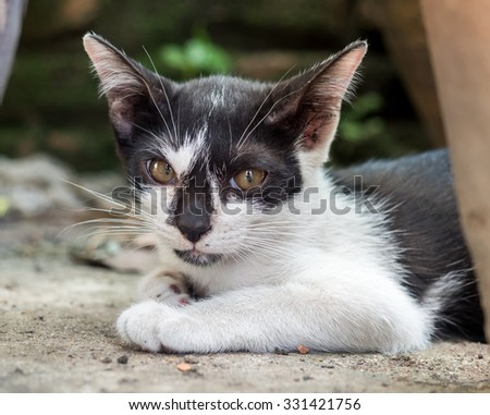 Little cute black and white kitten lay on outdoor concrete floor, selective focus on its eye