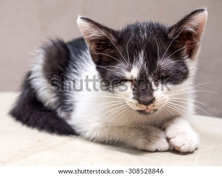 Little cute black and white kitten lay on white floor closed its eye, selective focus on its eye - stock photo