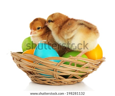 Little cute chickens and Easter candles in basket isolated on white - stock photo