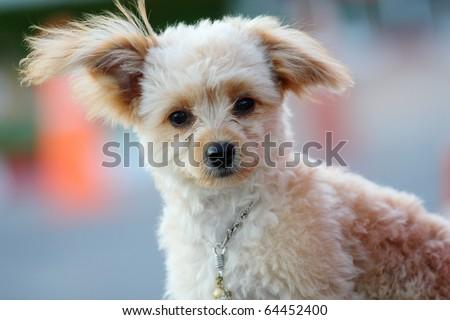 little cute dog - stock photo