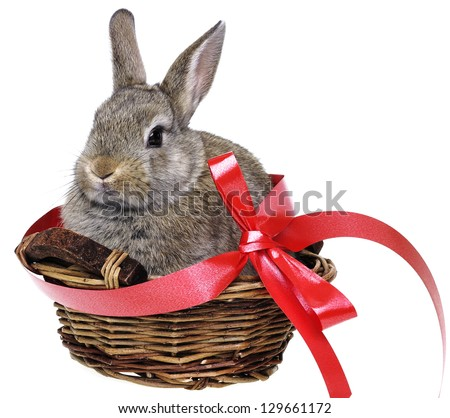 little cute easter rabbit in a basket with red ribbon - stock photo
