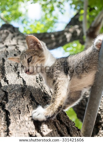 Little cute gray kitten on tree try to climb down, exciting, crying and fear, selective focus on its eye