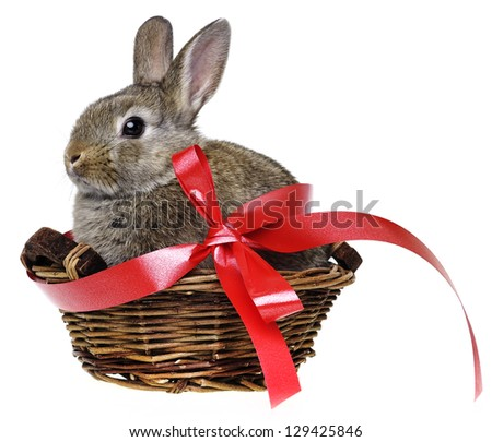 little cute rabbit in a basket with red ribbon - stock photo