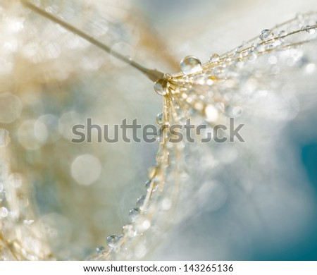 Little dandelion with drops,macro photography - stock photo