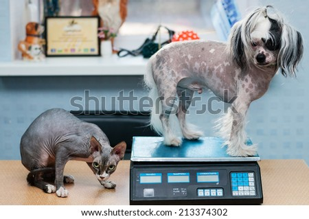 Little dog and cat at the veterinary checkup - stock photo