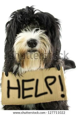 little dog ask help - stock photo