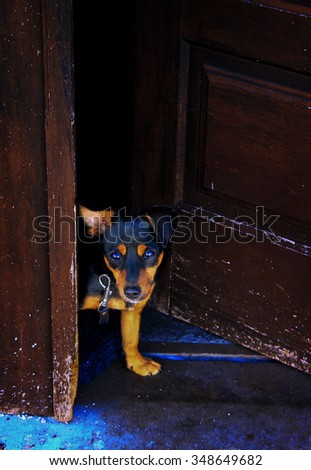 Little dog is waiting near the door - stock photo