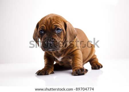 Little dog on white background - stock photo