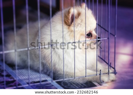 Little dog sits behind the bars of a shelter cage , A dog in an animal shelter, waiting for a home , alone in the dark - stock photo