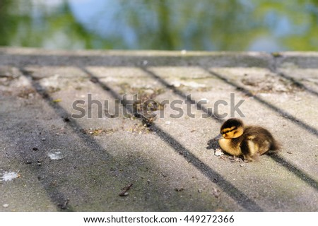 Little duck is sitting on the bank of artificial pond - stock photo