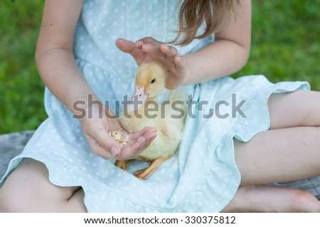 little duckling in the children's hands. outdoors. - stock photo