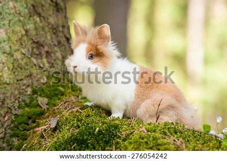 Little dwarf rabbit in the forest - stock photo