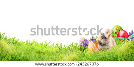 little easter bunny with eggs and flowers in garden grass on white background, banner for website - stock photo
