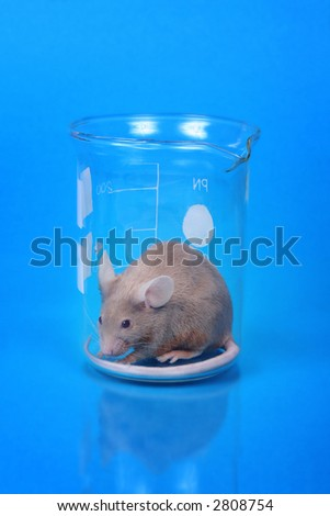 little fancy mouse in a beaker on blue paper background - stock photo