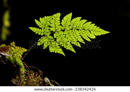 little fern in front of a stone - stock photo