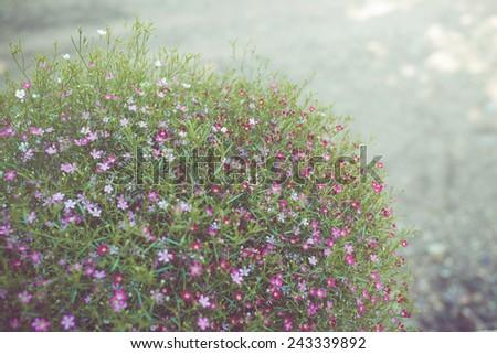 Little flower on retro tone - stock photo