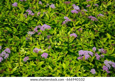 Little flowers green bush nature background stock photo royalty little flowers and green bush nature background pink flowers and green leaves as background mightylinksfo