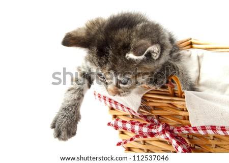 Little fluffy kitten in wooden basket for background use - stock photo